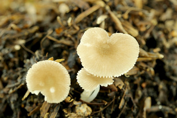 wild mushrooms on ground.