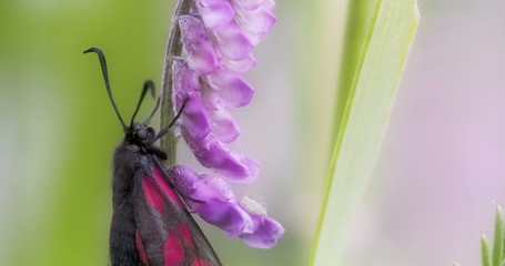 A black pink-red spotted butterfly Sony FS700 Odyssey 7Q 4K