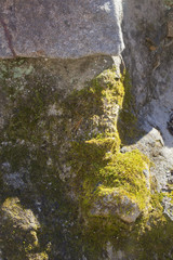 Detail of green moss growing on an old stonewall.