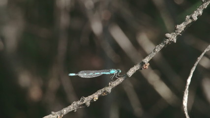 A dragonfly on the stem of a plant Sony FS700 Odyssey 7Q 4K
