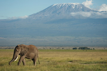 Elefant Kilimajaro