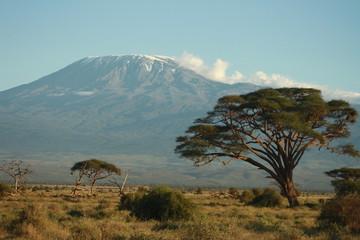 Kilimanjaro mit Baum
