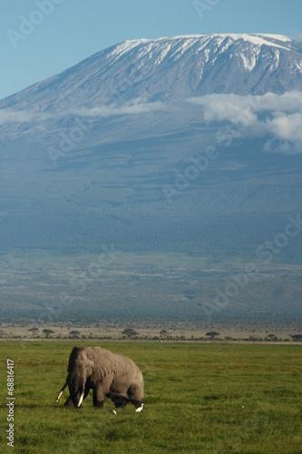 canvas print picture Elefant Kilimanjaro