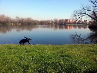 Cane sul prato in riva al lago