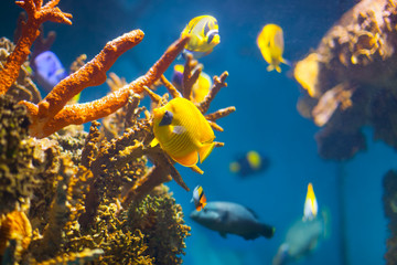 exotic fish at coral reef