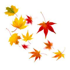 Herbststurm mit fliegenden Blättern vor weißem Hintergrund