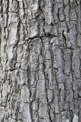 Textured of tree bark.