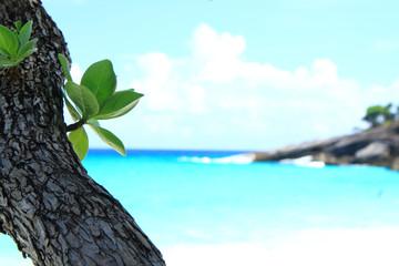 Leaf at the sea