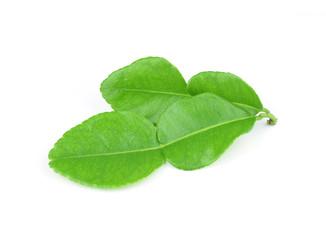Kaffir lime fresh leaf, close up