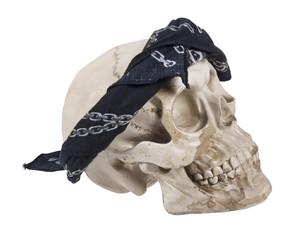 Skull Wearing a Black Bandana