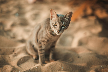 Cat siting on the beach