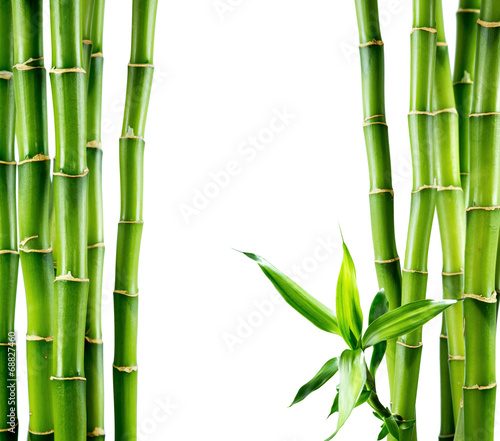 Papiers peints Vegetal branches of bamboo board