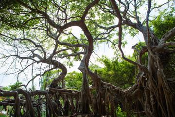 Tree climbers alive