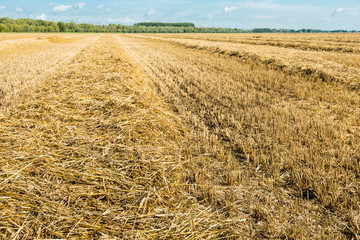 Straw from close on a large stubble field