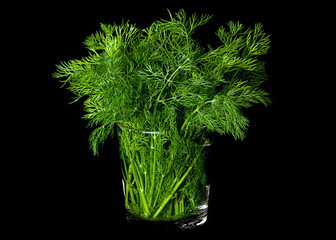 Dill aromatic herb on black