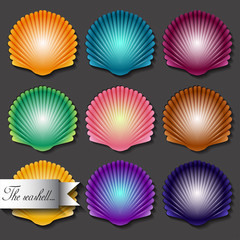 Sea scallop seashell set icon. Vector.