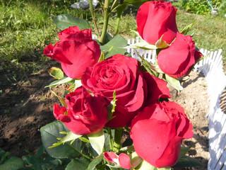 Shrub rose.