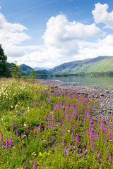 Lake District mountains and pink flowers Maiden Moor