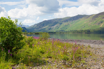 Lake District mountains and pink flowers Derwent Water