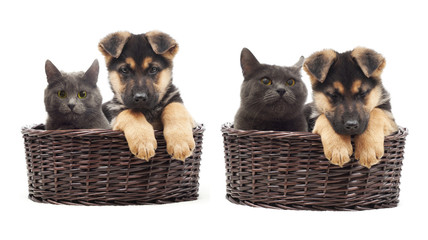 Cat and puppy in a straw basket