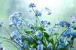 small blue wild flowers