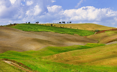 Tuscana landscapes. golden hills of Orcia.