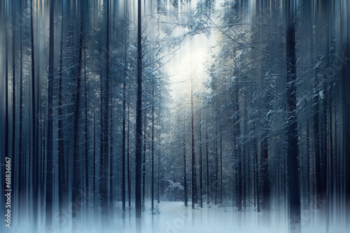 magical winter forest, a fairy tale, mystery - 68836867