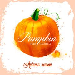 Vector pumpkin pattern, autumn composition of vegetables