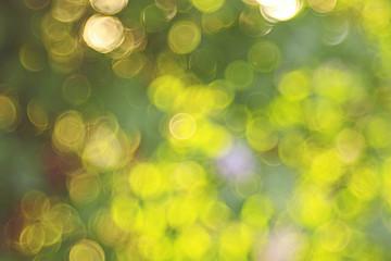 Summer green background blur bokeh highlights