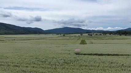 広大な蕎麦畑と蕎麦の花_1