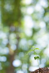 森の中の芽生え