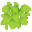 green big fresh leaves