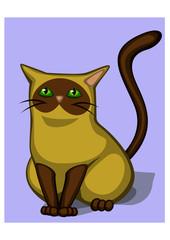 Seated Siamese cat