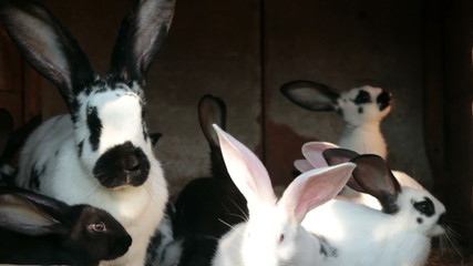 rabbits in cage