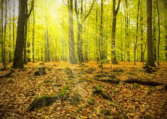Herbstwald mit Sonnenstrahlen