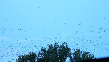 Die Vögel kommen