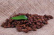 Coffee beans on sacking background closeup