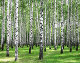 Summer forest - 68845492