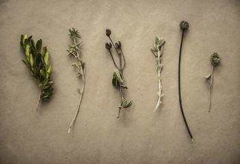 Herbarium on vintage background