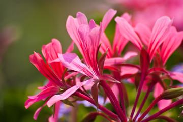 Gartenblumen während der Blütezeit