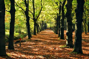 Natuur in de herfst