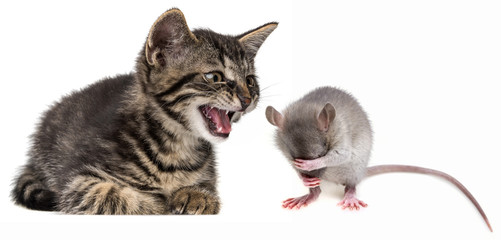 kitten and mouse