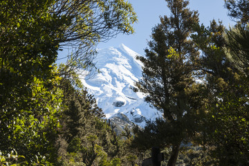 Snow capped mount framed by native bush.