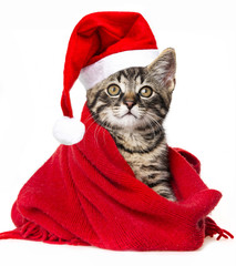 cute kitten with a red santa cap