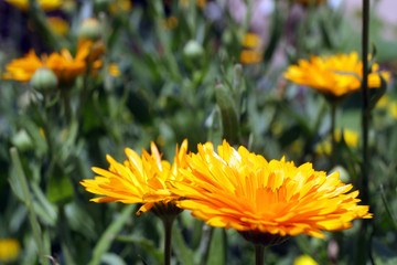 Beautiful spring flowers .