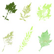 Set of watercolor leaves on a light background