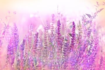 Beautiful purple flower in meadow - wild beaty