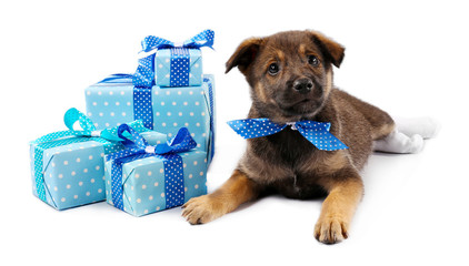 Puppy and boxes with presents isolated on white