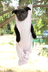 Puppy dressed in clothes for children and hung