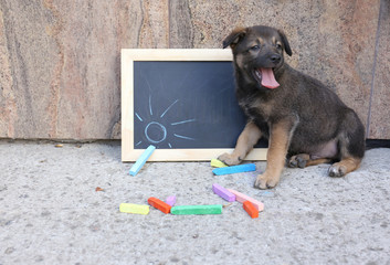 Puppy and blackboard and chalk on floor